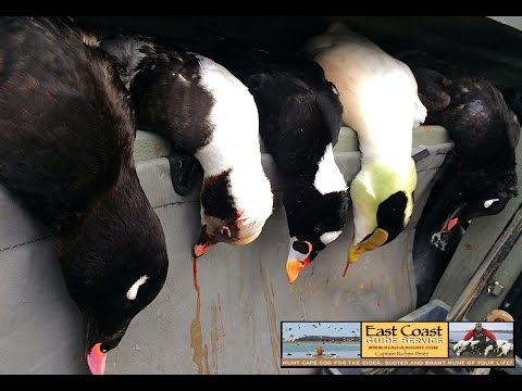 Sea Duck Hunting By The Thousands With Guide Capt. Ruben Perez, Master Lic.
