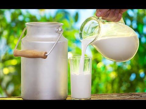 10 Интересных фактов о молоке