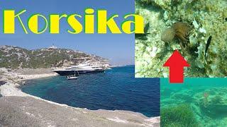 GOPRO Video 27 | Mein Urlaub auf Korsika 2 | HD(Das ist das 2. Korsika Video ;) Mit Fischen, SeeIgeln und TINTENFISCH!!! :0 Wenn es euch gefallen hat würde ich mich auf eine positive Bevertung sehr freuen., 2015-08-07T13:42:45.000Z)