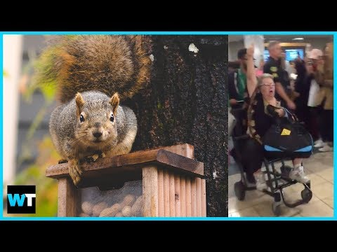 EMOTIONAL SUPPORT SQUIRREL Gets Passenger Booted Off Frontier Flight!