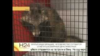 """Енотовидную собаку, найденную в центре Омска, передали в приют """"Друг"""""""