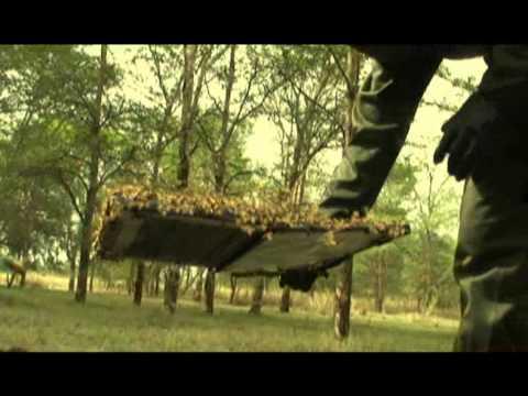 Amazing Bees The Incredible Flying Laptop Youtube