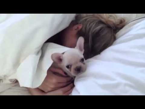 Девушке подарили собаку.  Подарок любимой в постель