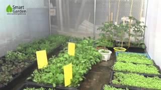 Mô hình nhà kính trồng rau sạch mini tại Hà Nội