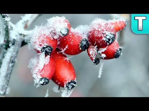 10 Fruits That Grow In Winter Ep. 17   Top 10 Fruits You've Never Heard Of