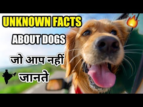 UNKNOWN Dog facts / Interesting facts for dogs in hindi / Interesting facts About dogs