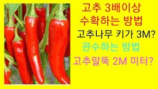 Red pepper, red pepper, red pepper, and special red pepper support are