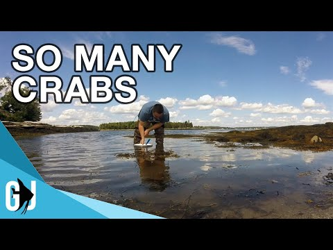 #598: Catching Hermit Crabs At The Beach - Update Monday