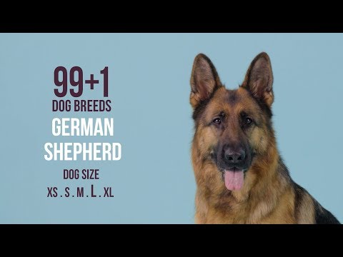 German Shepherd / 99+1 Dog Breeds