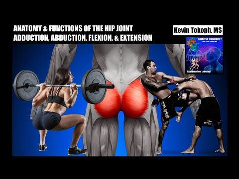 Anatomy & Functions of the Hip Joint Muscle | Adduction, Abduction, Flexors, & Extensors