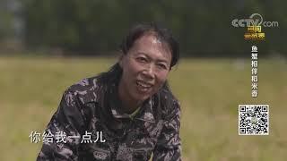 《田间示范秀》 20201222 鱼蟹相伴稻米香|CCTV农业 - YouTube
