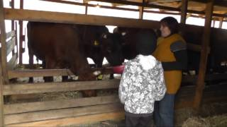 Семейная ферма: беды и победы(, 2013-10-30T04:13:32.000Z)