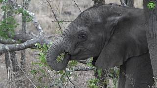 Moment Of The Week: Learning how to be an elephant!