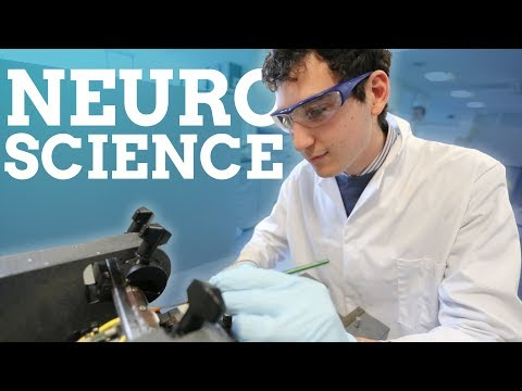 Neuroscience | Work experience, projects and being an international student