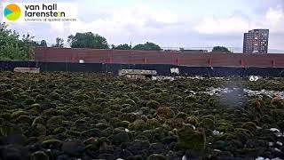 Broedende visdieven Leeuwarden (Live)