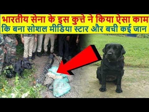 भारतीय-सेना-के-इस-कुत्ते-ने-किया-ऐसा-काम-कि-बना-सोशल-मीडिया-स्टार-और-बची-कई-जाने