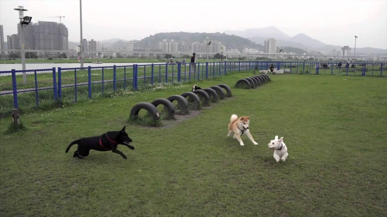 160417 蘆堤寵物公園 - YouTube