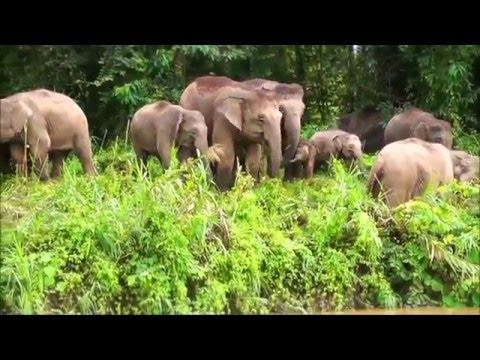 Kinabatangan Wildlife Safari with Borneo Eco Tours - Sabah, Borneo