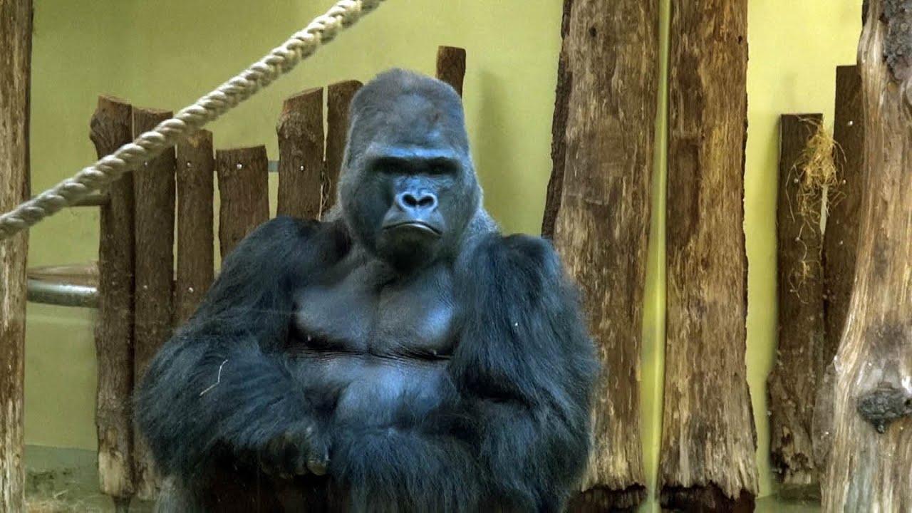 Berlin Zoological Garden walk in HD - YouTube