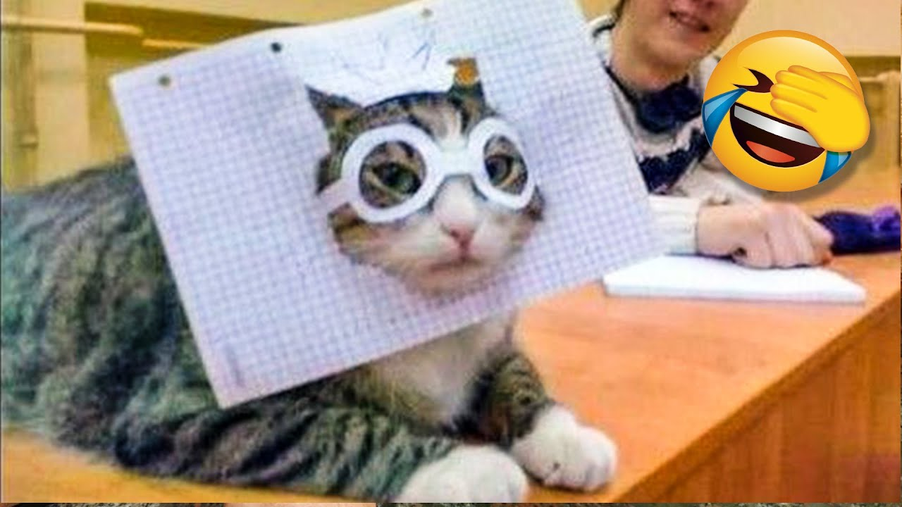 Funniest Cat Videos That Make Your Day Better 😻