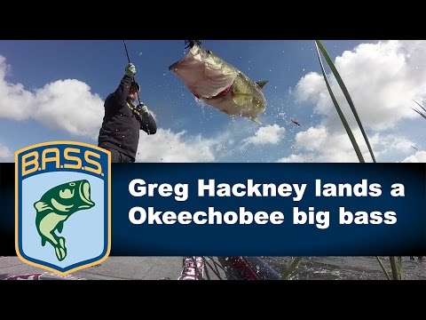 Greg Hackney catches a big bass on Day 1 on Lake Okeechobee