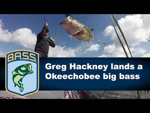 Greg Hackney catches a big bass on Day 1 on Lake Okeechobee