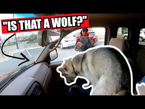 my-husky-meets-new-people-at-chic-fil-a!-(britney-spears-goes-to-lunch)