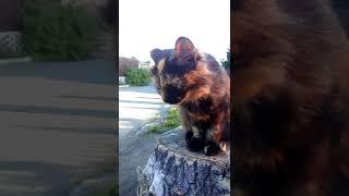 Рассказ о бездомном кошке , по имени Хонда