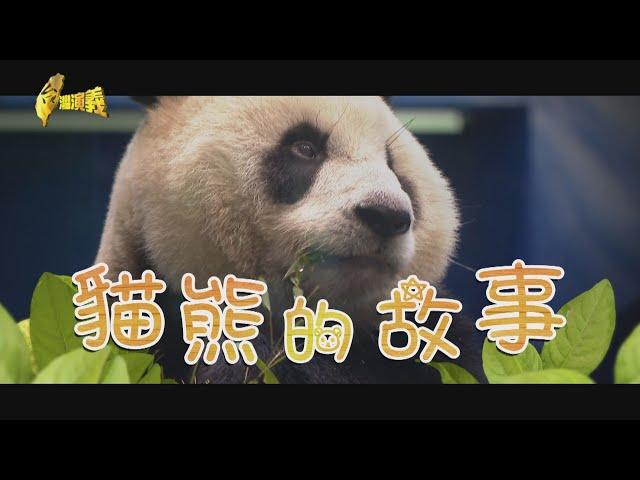【台灣演義】貓熊的故事 2020.08.09 | Taiwan History