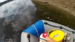На катере по реке Томь за щукой