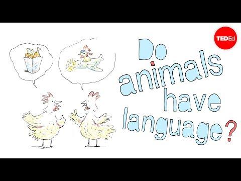 Video image: Do animals have language? - Michele Bishop
