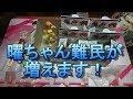 ビンゴゲームかな?ガシャポートレイツBOX開封レビュー【ラブライブ!サンシャイン!!】