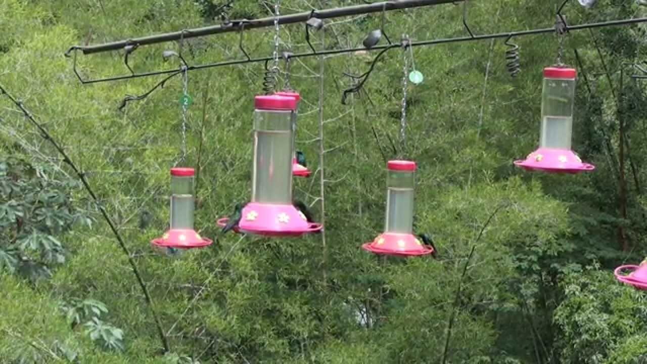 Colibries video jard n encantado youtube for El jardin encantado madrid