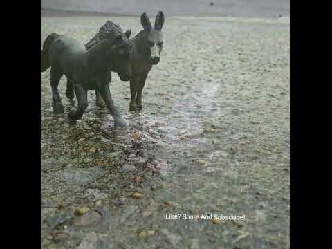 Animal slideshow by me- Enjoy!