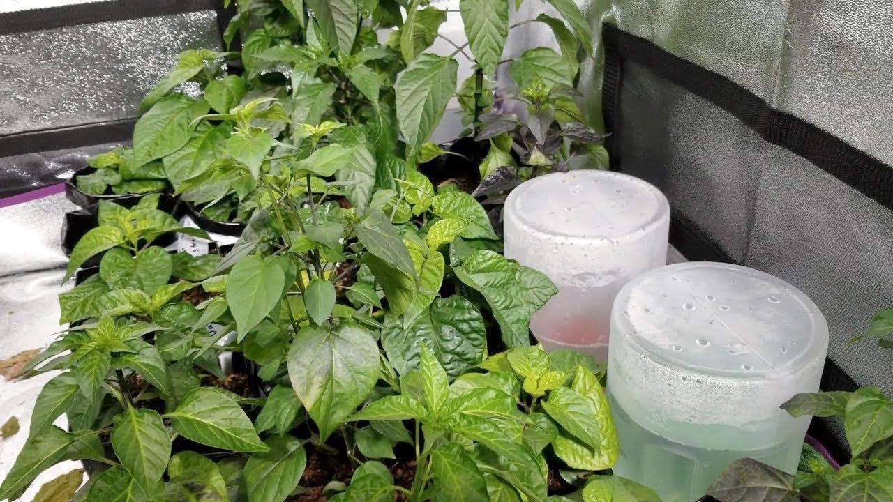Hydroponic Food Production Howard Resh Pdf