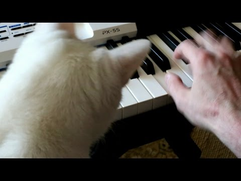 Cat loves piano sound and hates electro