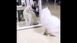 「귀여운 고양이」웃지 않으려 노력하십시오 😹 가장 웃긴 고양이 영화 #01
