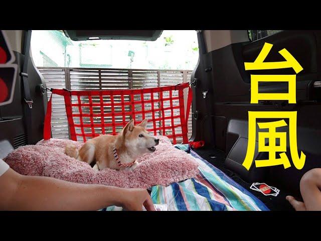 柴犬小春 台風19号!車中で楽しく過ごす 三菱新型デリカ