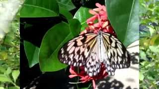 The Eternal Mystery of a Butterfly