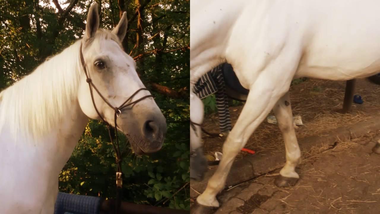 Mein Eigenes Pferd Spiel
