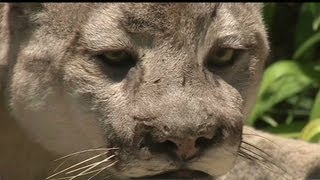California woman spooked by phony mountain lion