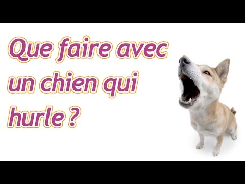 que faire avec un chien qui hurle youtube. Black Bedroom Furniture Sets. Home Design Ideas