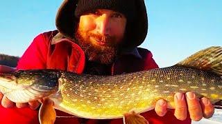 В ЭТОМ ПРУДУ МНОГО ЩУКИ Рыбалка на жерлицы Хищник выбирает окуня а не плотву для атаки
