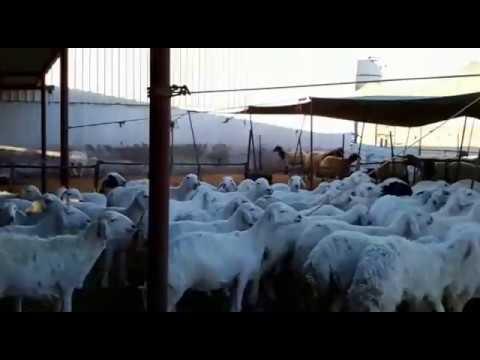 saudi farm house jubail ksa