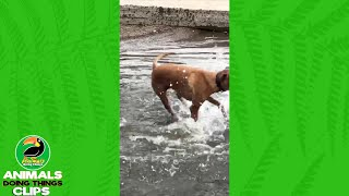 Spinning Dog Playing in Water | Animals Doing Things Clips