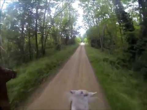 Gopro : Balade à cheval