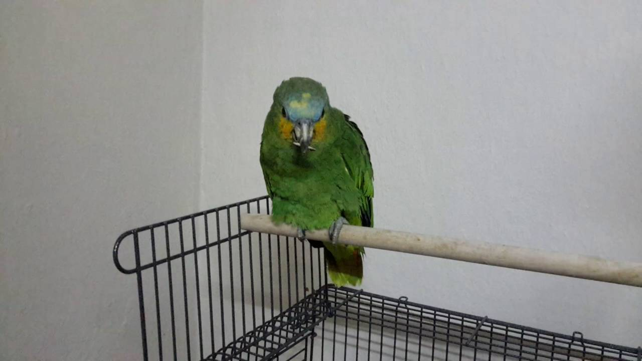Evdeki papağanlar