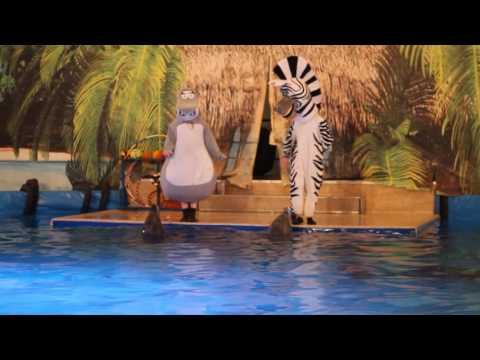 Дельфинарий в Купчино