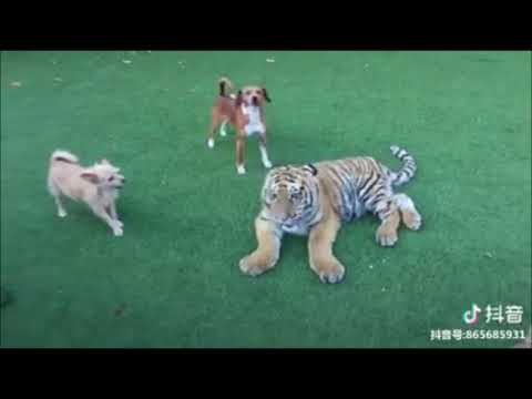 CATS Vs DOGS 2018 VIdeos || Funniest Animals 2018 Compilation