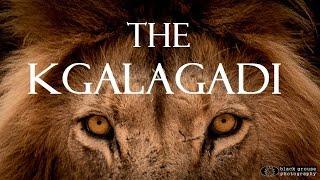 The Kgalagadi (KTP) - A Kalahari Self-Drive Safari Adventure Full HD